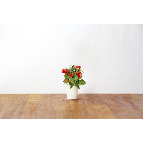 Recarga Mini Tomate 3-Pack