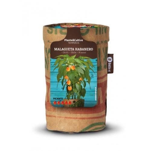 Pepperclub - Habanero Laranja