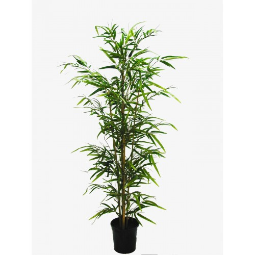 Árvore De Bamboo C/ 1,10M