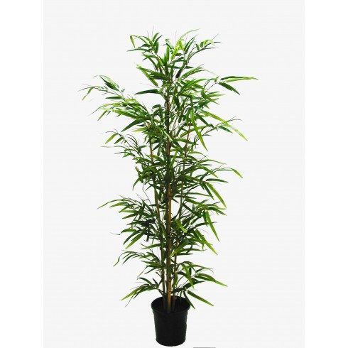 Árvore De Bamboo