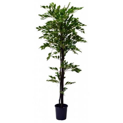 Planta Glícina S/ Flor C/ 1,50 Mts (Pc)