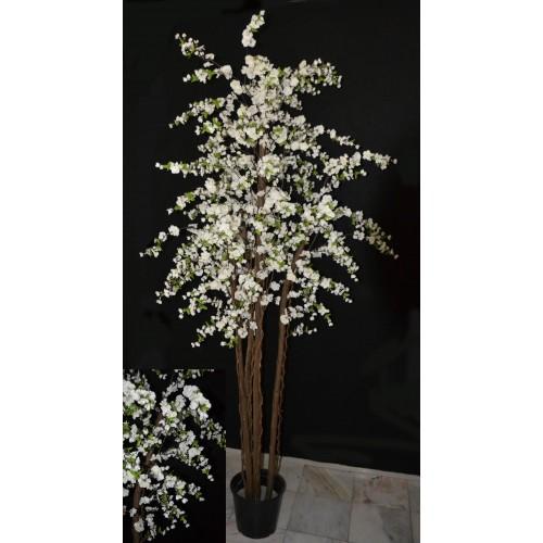 Árvore Flor Macieira