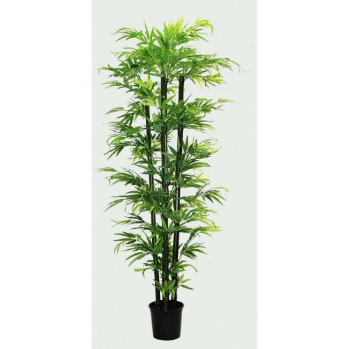 Árvore de Bamboo 2,00m