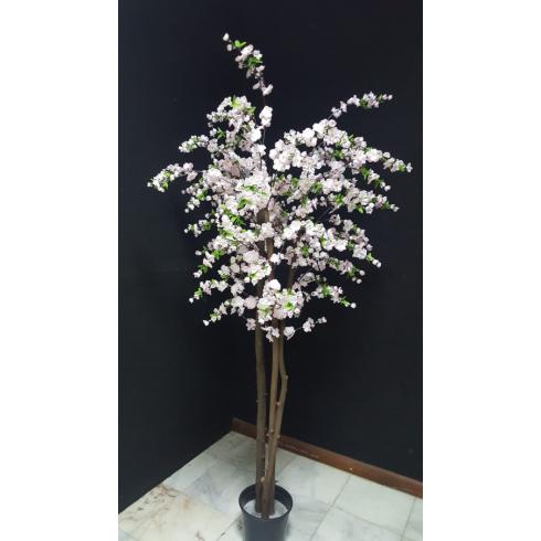 Planta de Flor de Macieira